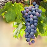 Fruitful Summer for Regular Baptist Ministries