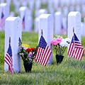 Suggestion for Honoring Veterans on Nov. 9